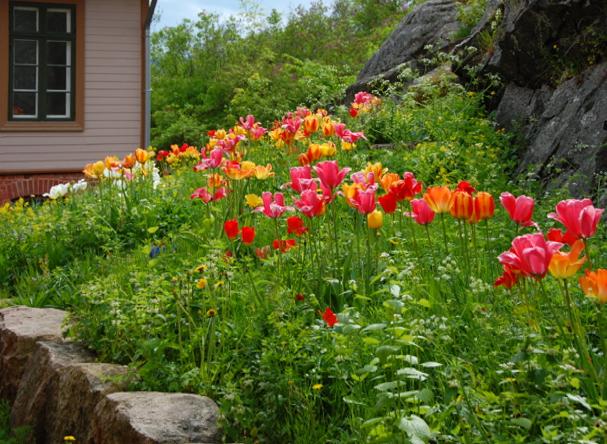 Oscarsborg flowers